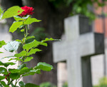 Contribution on church, faith and social issues