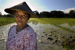 Indonesia rice communities